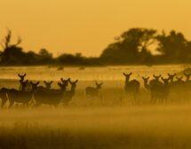 National Geographic със специална програма за Деня на Земята