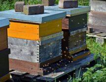"""Осинови кошер"" – твоят начин да помогнеш на пчелите"