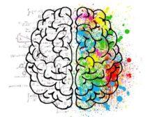 Има ли мозъкът пол?