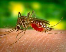 Кого хапят комарите