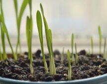 Домашна градина за витамини