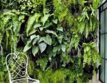 Живите зелени стени
