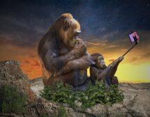 Маймуна краде смартфон, прави си селфита