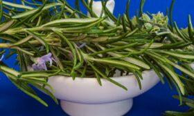 Розмарин – ползи за здравето и помощ в кухнята