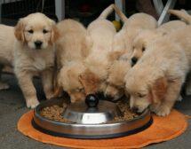 Храните ли кучето си правилно?