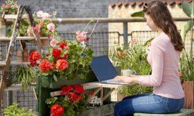 Мушкатото – перфектен избор за начинаещи градинари