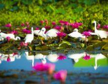 10-те най-красиви национални парка в Тайланд