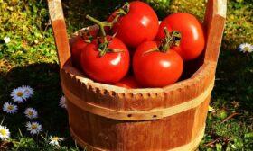 А в нашето село растат ей такива домати!