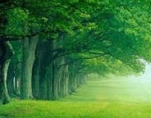 Вечнозелени хитове