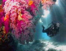 Червено море – коридорът на чудесата