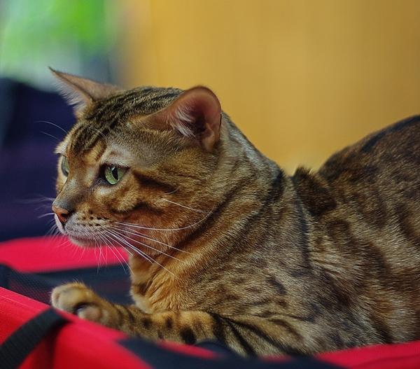 Родопски черги, джаз и котка