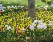 Пролет край Босфора