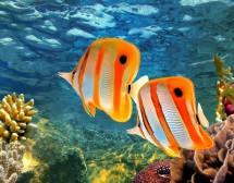 Големият бариерен риф – гмурнете се в едно от 7-те чудеса на света