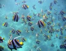 Малдивите – раят на гмуркачите