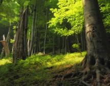 Вълшебната гора