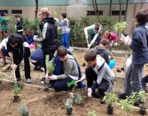 Билкова градина в училище