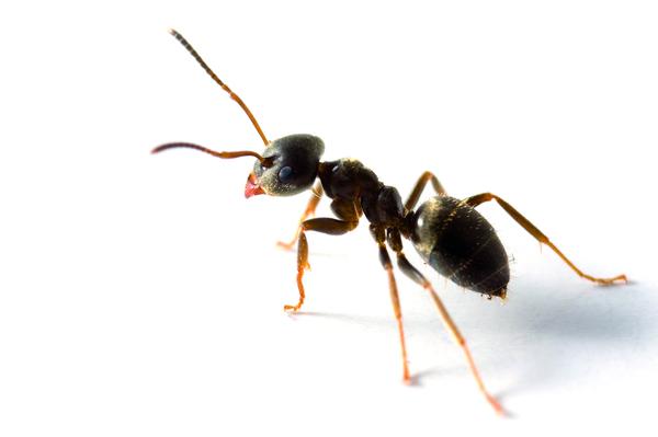 За мравките и жените