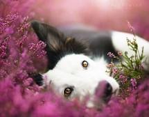Кучешки портрети