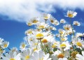 Г-н Богуски отива да мирише цветята