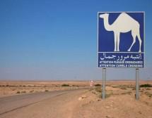 Тунис в чинията и други истории от Магреба