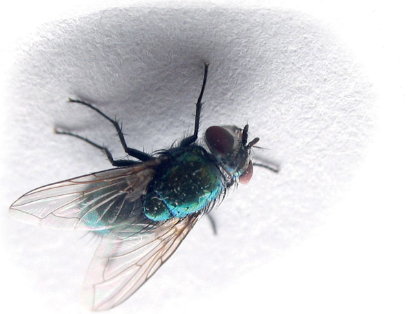 Мъжът, жената и мухата